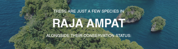 THESE ARE JUST A FEW SPECIES IN RAJA AMPAT