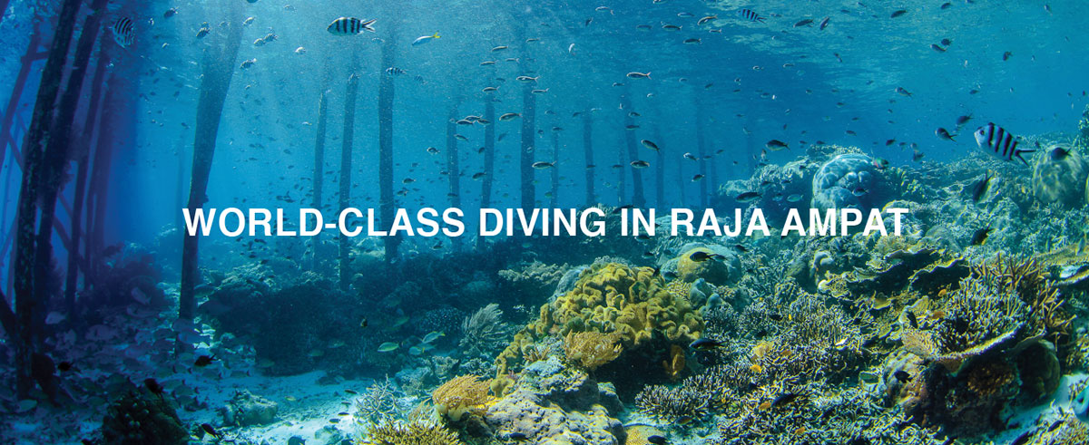 World-Class Diving in Raja AMPAT