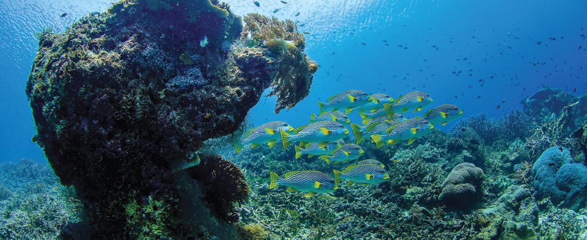 Meridian Adventure Dive