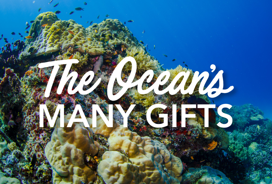 The Ocean's MANY GIFTS