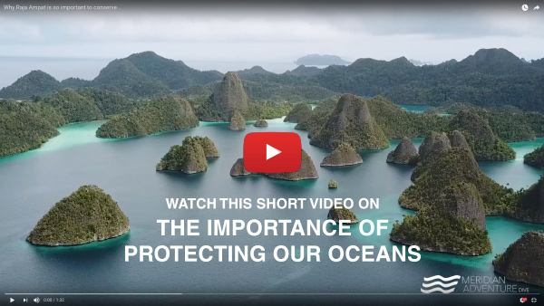 THE IMPORTANCE OF PROTECTING OUR OCEANS
