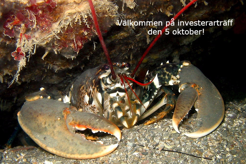 Investerarträff i Göteborg den 5 oktober!