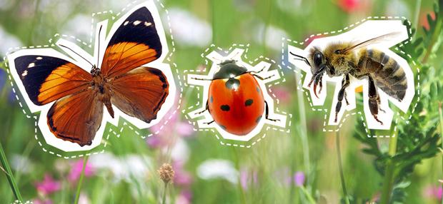 Tipps gegen Insektensterben