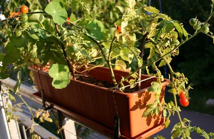 Gemüse ohne Garten