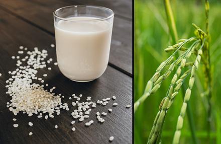 Reismilch: gesunder Milchersatz?