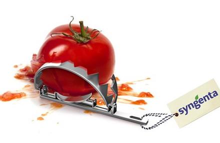 Einspruch gegen Tomaten-Patent