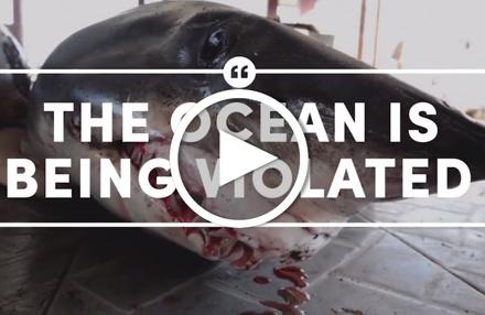 Video: Meere retten