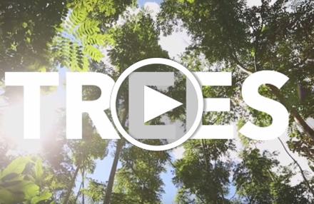 Ecosia: 5 Mio. Bäume