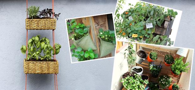 Ideen für den Gemüseanbau auf dem Balkon