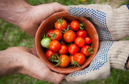 Gemüse ernten ohne Garten