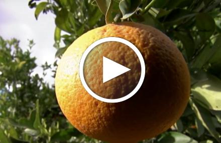 Billig-Obst im Discounter