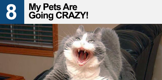 My Pets Are Going CRAZY!