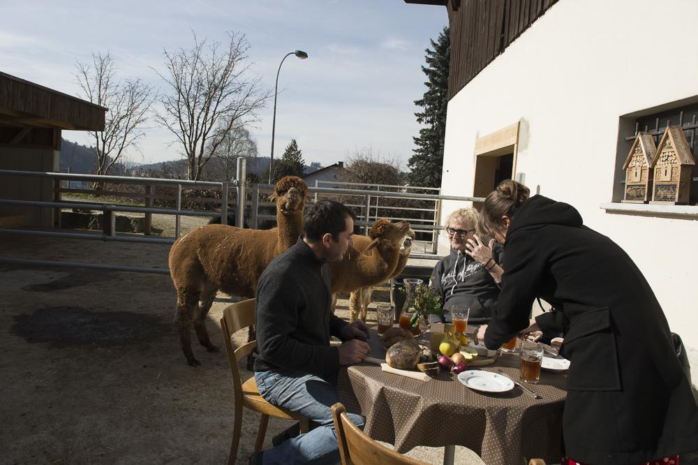 Im Winter gehört der Platz den Tieren, im Sommer den Gästen