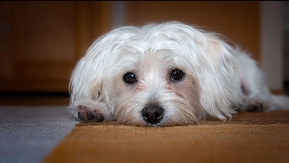 I 5 migliori calmanti per cani