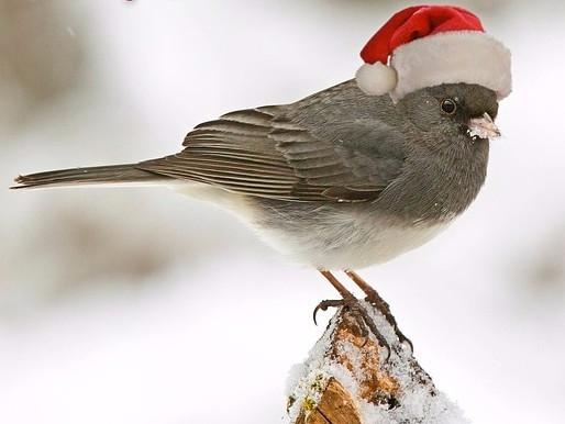 Bird wearing Christmas hat