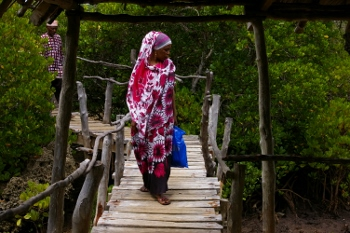 Wasini's Assistant Chief Bey Hemed Juma tours the mangrove's walkway, built by the Wasini Women's Group.