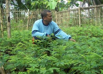 Assistant Field Rep in Indonesia, Irman Meilandi