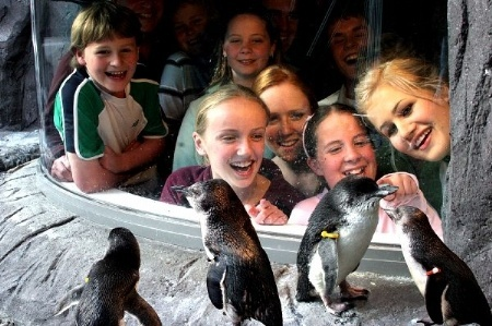 Antarctic Centre.
