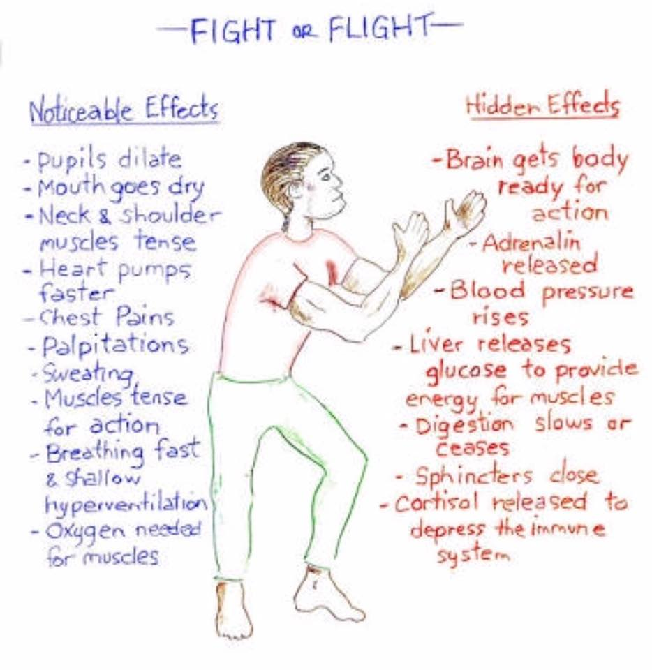 Effects of the body's fight or flight alarm system.