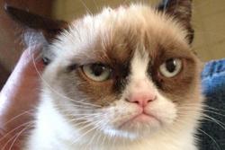 Grumpy Cat Earnings