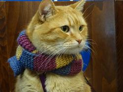 bob the streetcat
