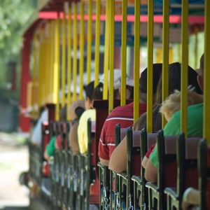 Ride the zoo train for free!