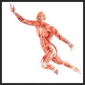 fascia man, myofascial release