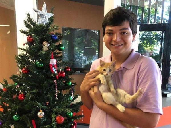 Kitten adopted from Centro de Control de Animales-Municipio de San Juan