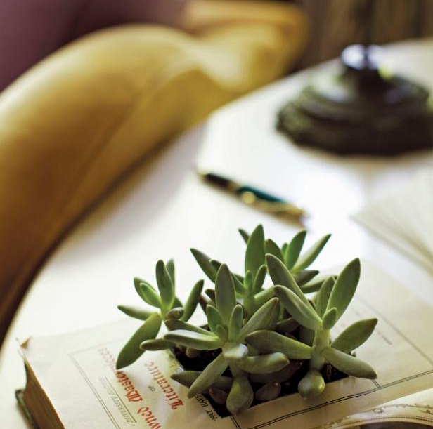 Easy, Creative Book Planter