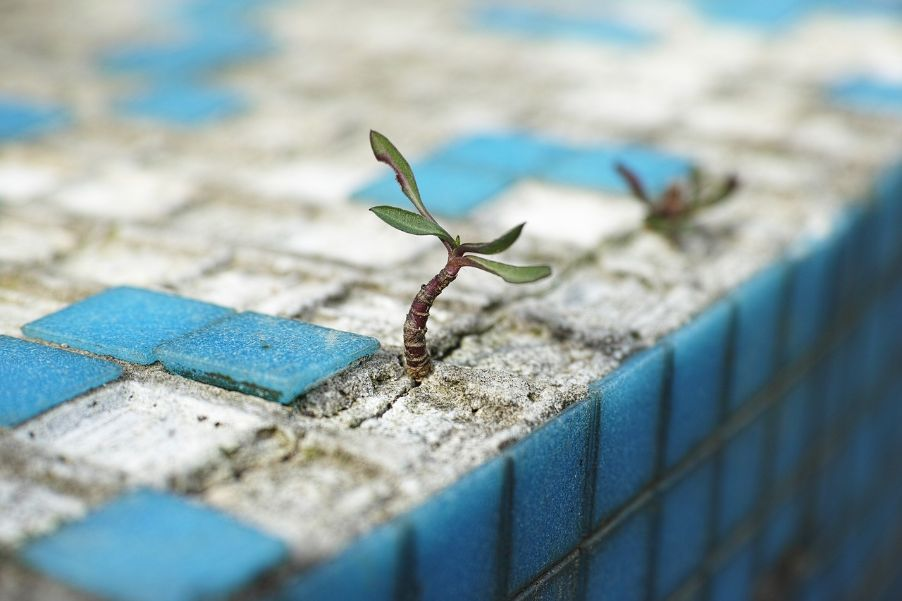 a tiny plant sprouting from in between broken tiles