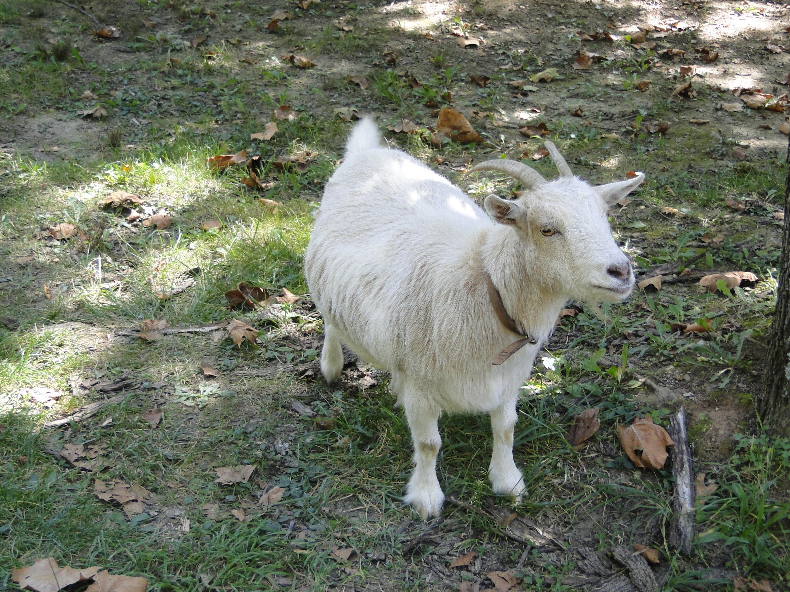Goat's Milk skincare at The Camellia