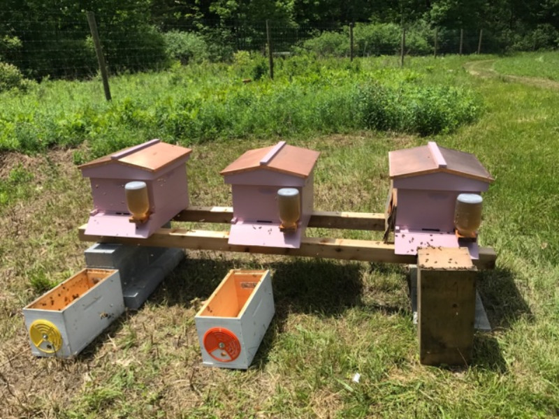 New hives near the blueberries