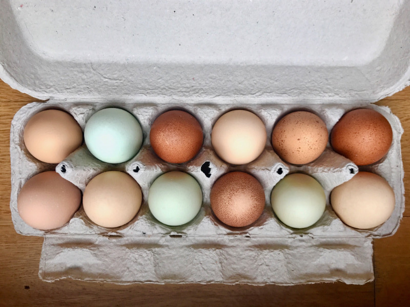 Eggs from pastured heritage breed hens