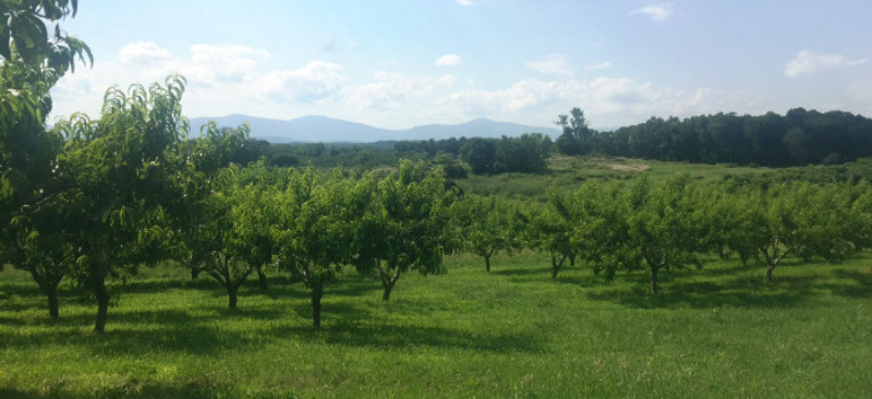 View from the Peach Orchard