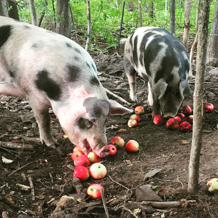 Rose Hill Farm Hudson Valley Pick Your Own Apples Pastured Pork Shares