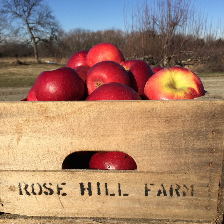 Rose Hill Farm Hudson Valley Orchard apples