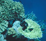 Ancient coral samples shed light on rising sea levels
