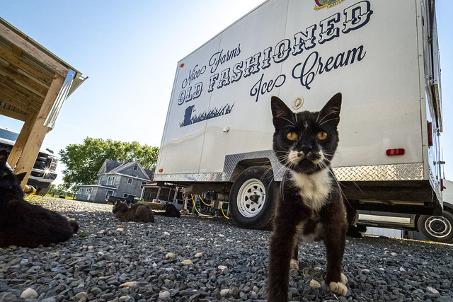 Army veteran Bob Miller's Nice Farm Creamery with a black and white barn cat and Creamery truck in background