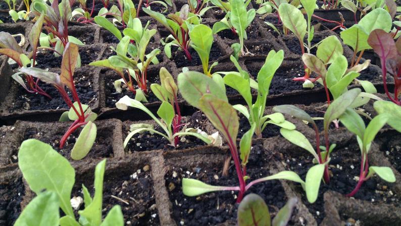 Seedling Starting Workshop