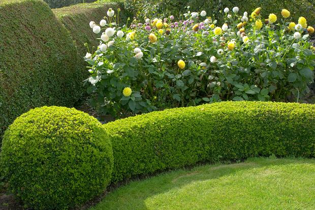 Trim bushes and trees