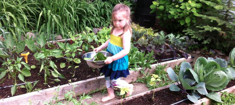 Little vegetable gardener