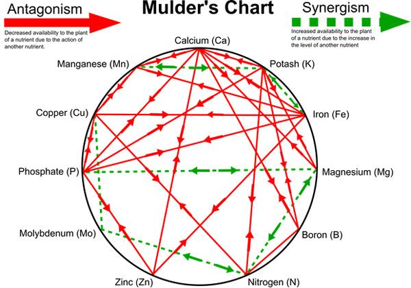 mulders chart