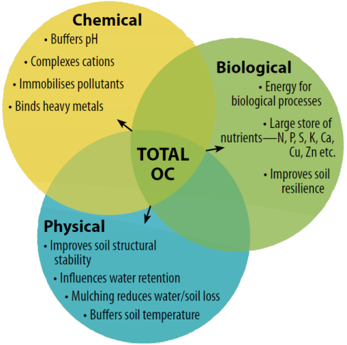 Figure 1: Organic Carbon relationships in the soil ecosystem