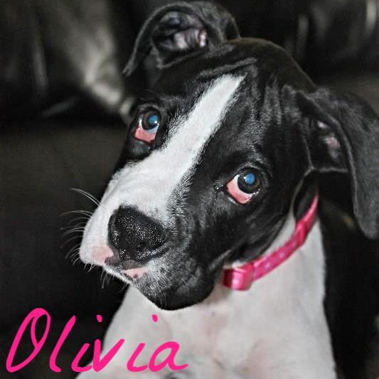 Help Olivia!