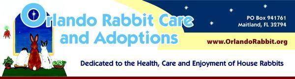 Orlando Rabbit Care and Adoptions