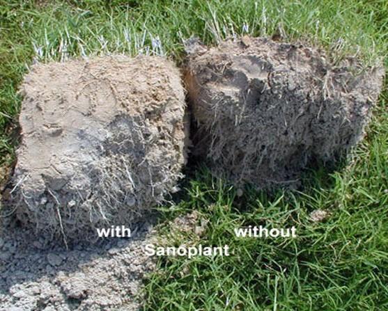 Sanopant grass comparison