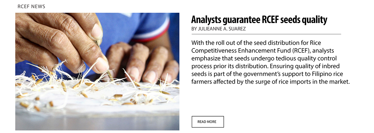 Analysts guarantee rcef seeds quality