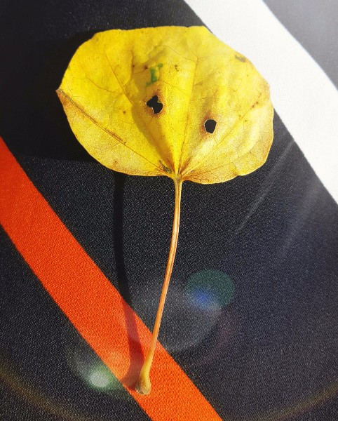 Autumn leaf - do you see a face in there?