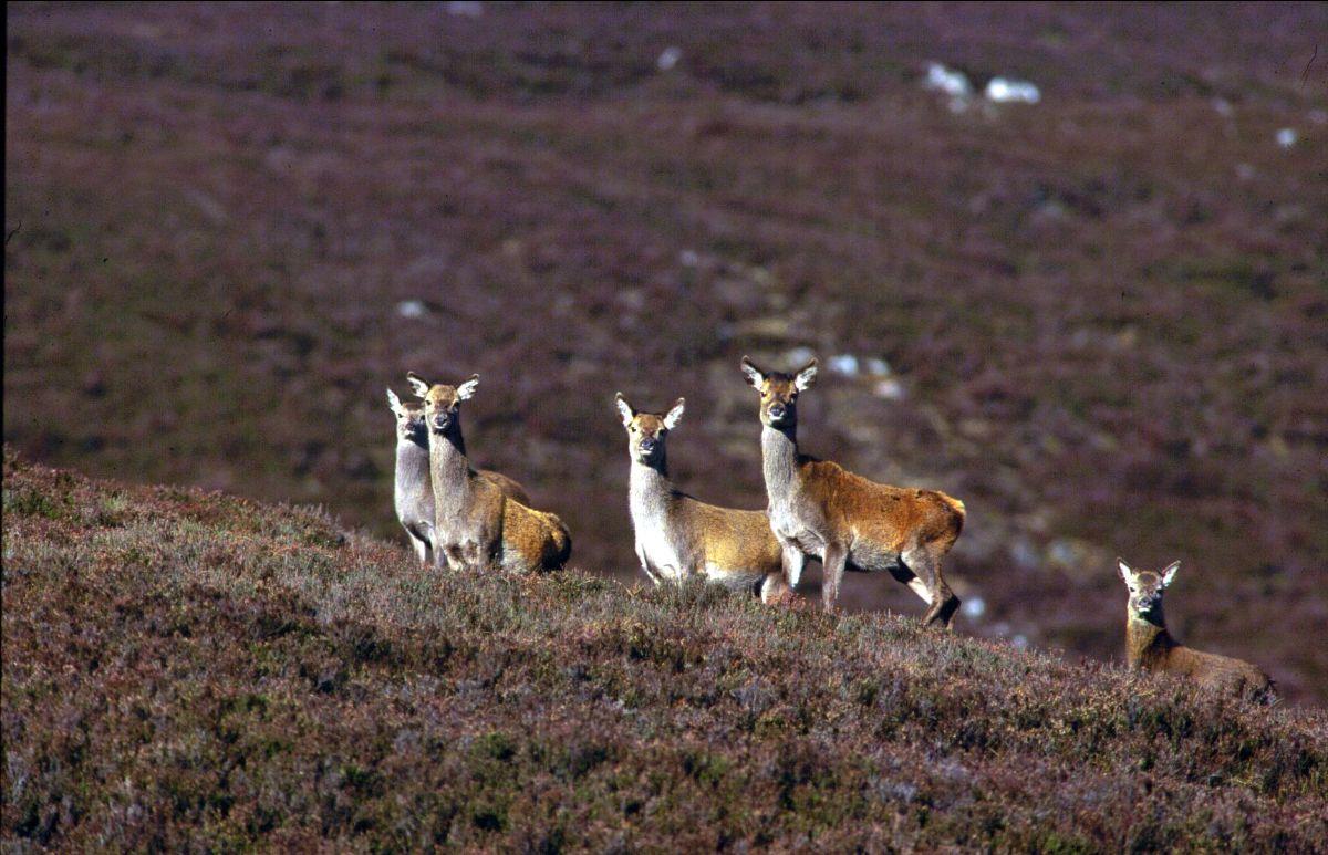 Veterinary Deer Society Congress 2019