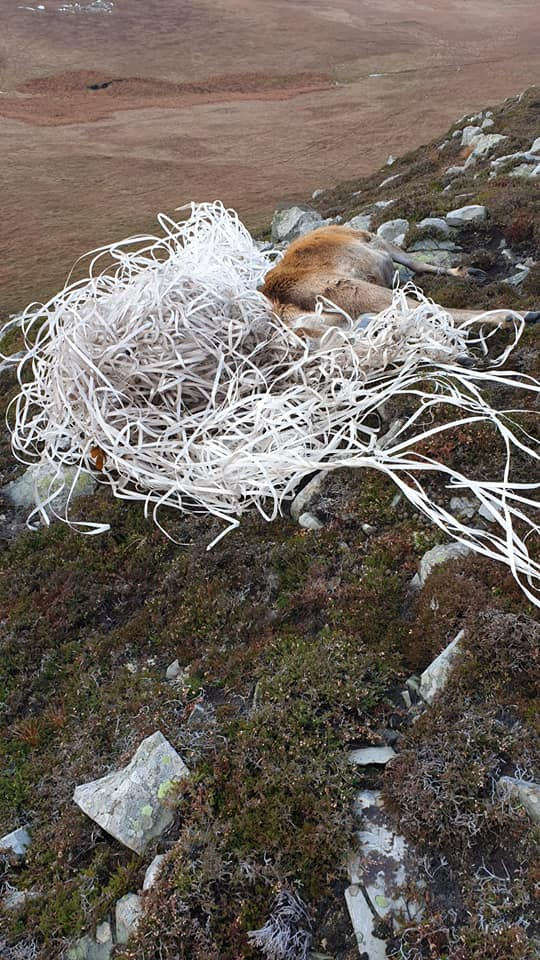 Plastic Pollution Causes Stags Death on Jura